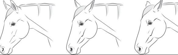 """Description of the features of the equine pain face"" sciencedirect.com"